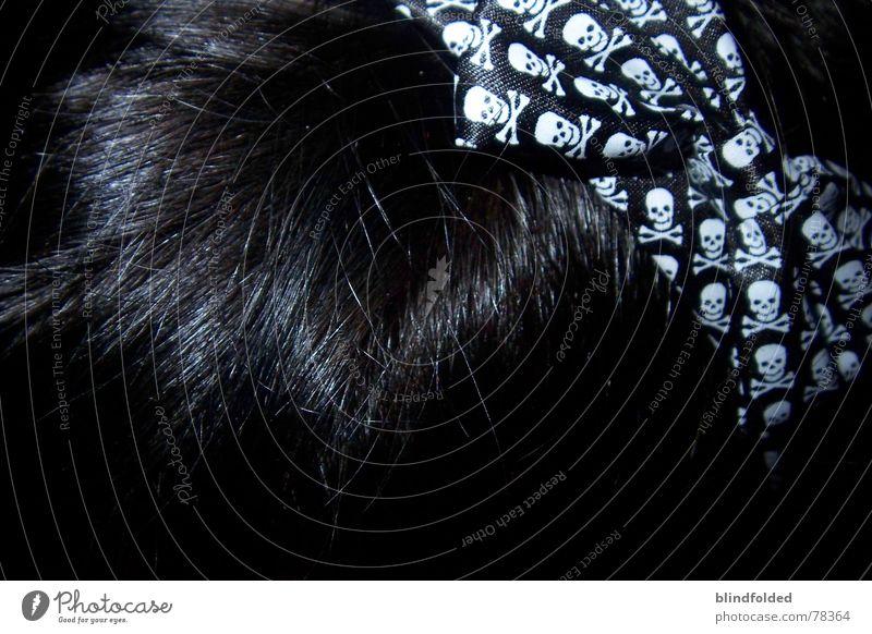 Black Dark Glittering Loud Bow Death's head Hair circlet Finding Nemo