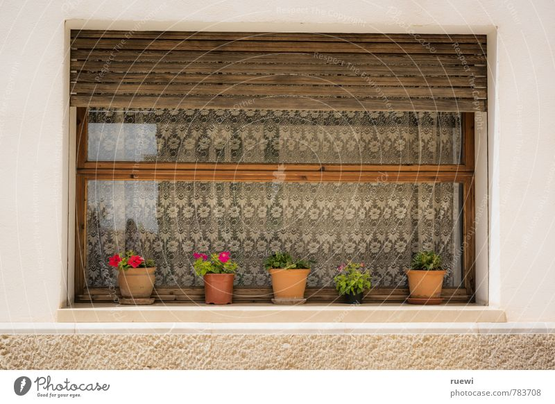 allotment Leisure and hobbies Living or residing Flat (apartment) House (Residential Structure) Garden Decoration Facade Shutter Window pane Curtain Gardening