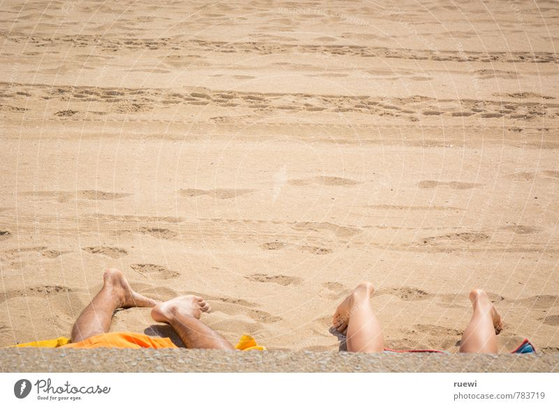 quadruped beach Beautiful Skin Relaxation Calm Leisure and hobbies Vacation & Travel Tourism Far-off places Summer Summer vacation Sunbathing Beach Human being