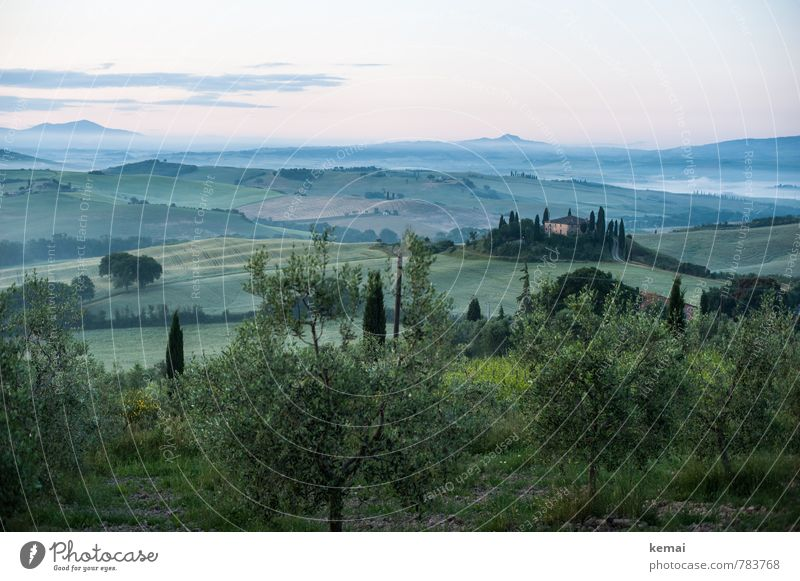 Tuscan morning Vacation & Travel Tourism Trip Far-off places Freedom Tuscany Italy Environment Nature Landscape Plant Sky Clouds Summer Fog Tree