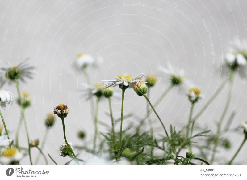 summer flowers Environment Nature Plant Summer Flower Leaf Garden Meadow Field Blossoming Faded To dry up Growth Brash Happiness Small Wild Yellow Green White