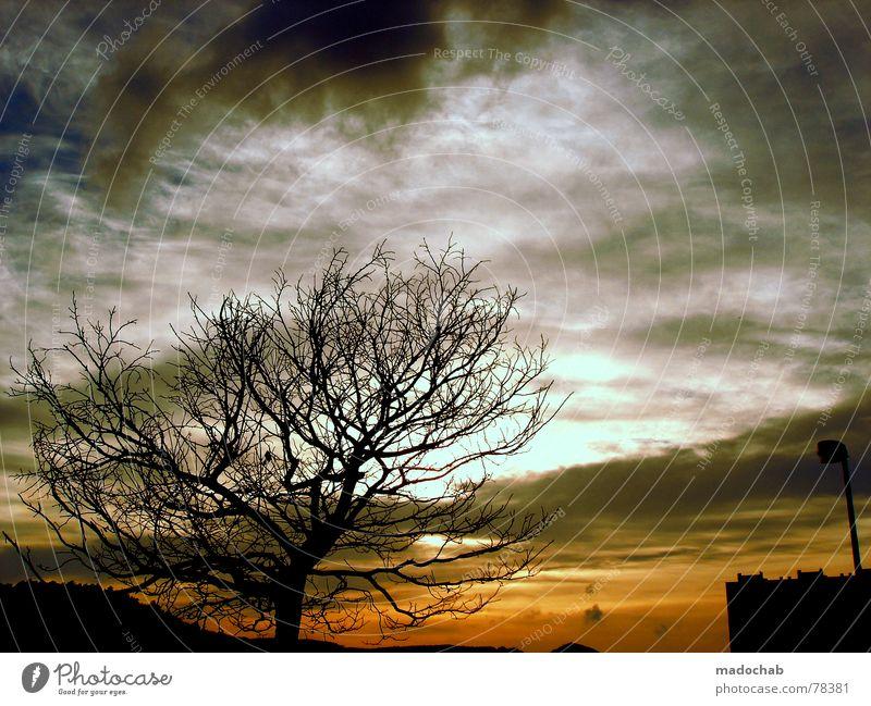 Sky Tree Clouds Dark Autumn Sadness Moody Weather To fall Bla Africa
