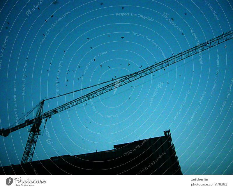 Construction site Upward Section of image Blue sky Partially visible Flock of birds Skyward Construction crane Outrigger
