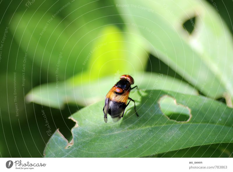 Nature Green Plant Summer Leaf Animal Black Forest Environment Natural Garden Brown Orange Fly Climate Simple