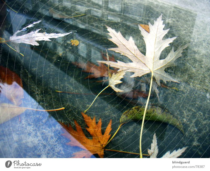 Novemberrain Reflection Puddle Leaf Autumn House (Residential Structure) Window Covers (Construction) Roof Multicoloured Transience Wall (barrier)