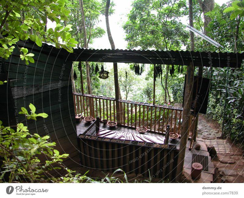 Ayurveda Photographic technology Virgin forest kaz Alternative medicine