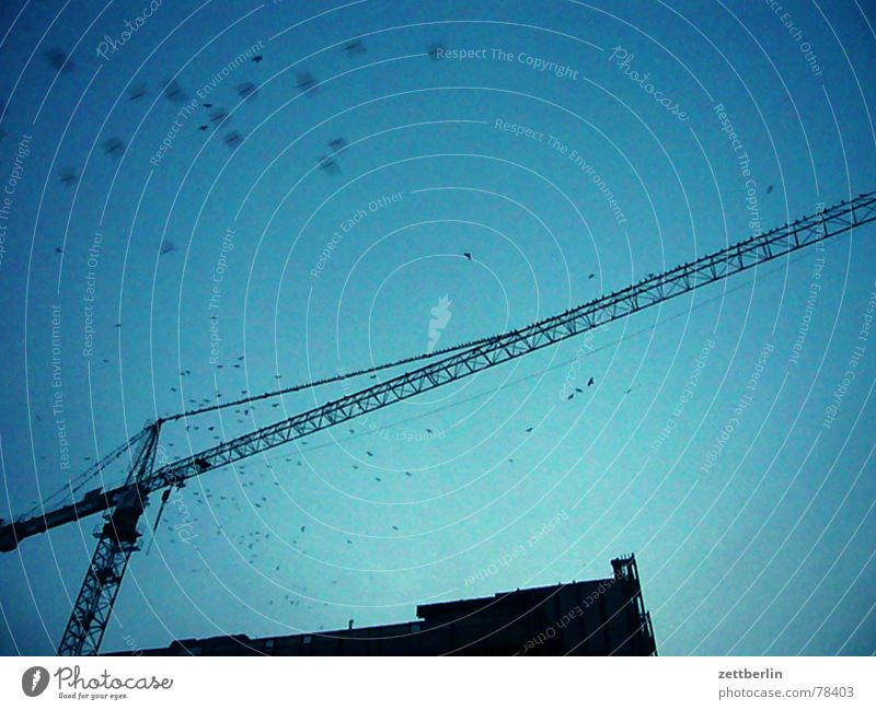 Construction site Upward Section of image Blue sky Partially visible Flock of birds Skyward Construction crane Outrigger