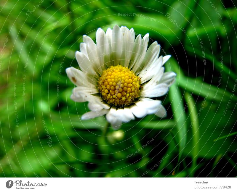 Nature Vacation & Travel Green Beautiful Summer Flower Loneliness Joy Yellow Life Blossom Spring Meadow Grass Happy Small