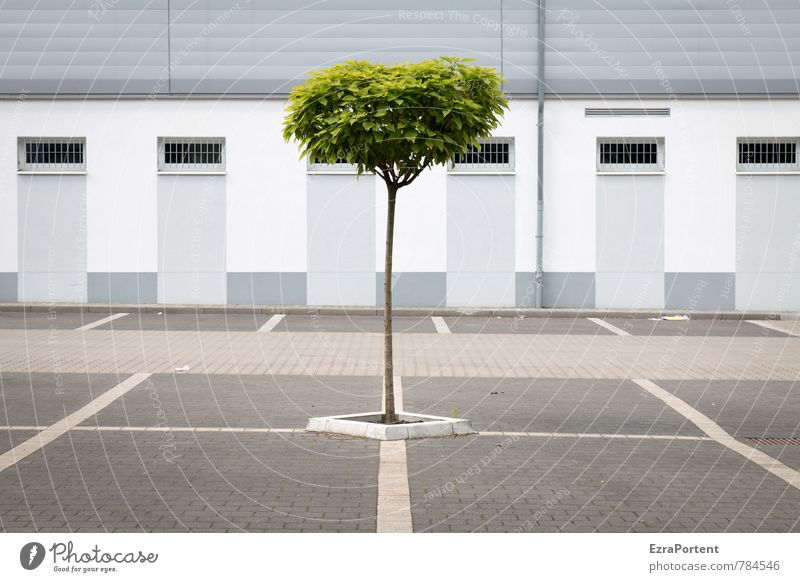 down-to-earth / enforce Nature Spring Summer Climate Plant Tree Town House (Residential Structure) Places Manmade structures Building Architecture