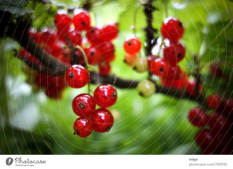 Nature Green Plant Summer Red Environment Natural Garden Food Glittering Growth Fruit Fresh Beautiful weather Nutrition Round