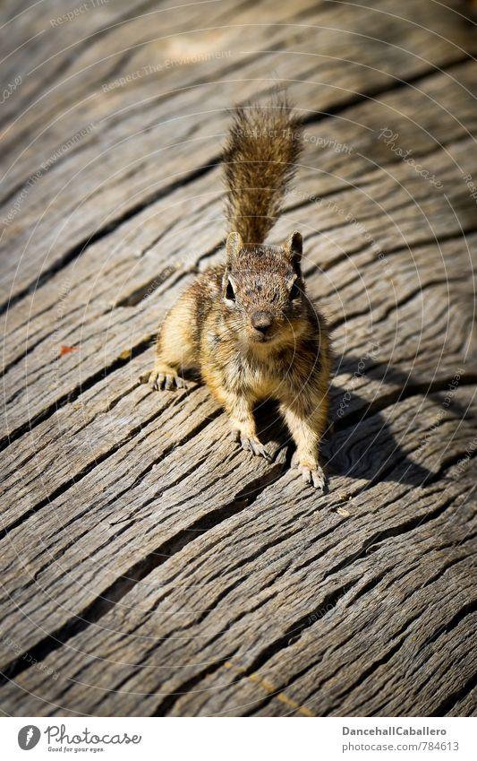 croissant Tree Tree bark Animal Wild animal Eastern American Chipmunk Rodent Squirrel 1 Observe Elegant Brash Small Curiosity Cute Love of animals Photo shoot