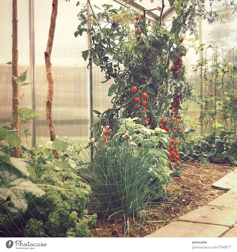 greenhouse Nature Elements Earth Summer Plant Agricultural crop Garden Hut Healthy Hot Protection Contentment Greenhouse Tomato Beans Rod Herbs and spices Damp