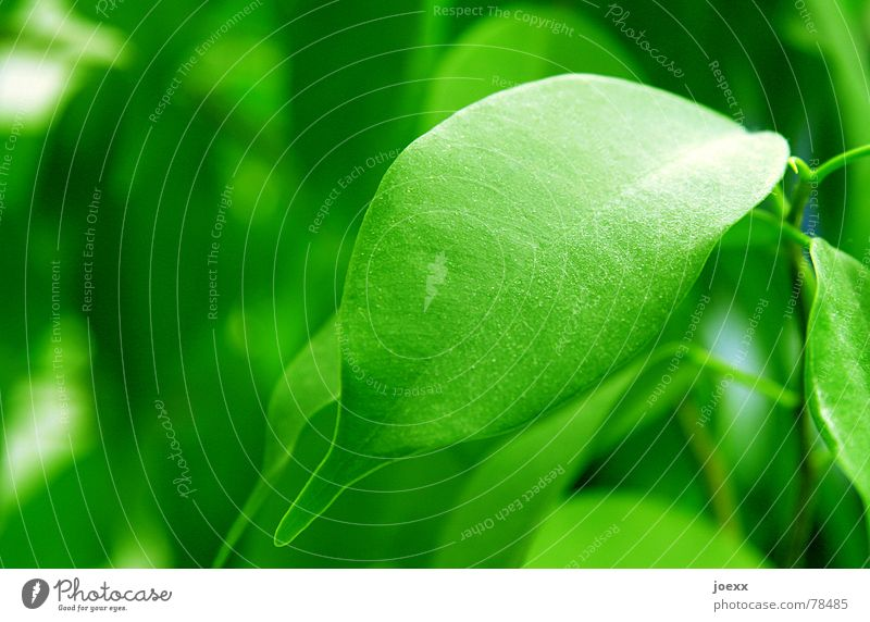 Nature Green Tree Plant Leaf Cleaning Living room Household Poison Dust Houseplant Leaf green Dusty Dust Part of the plant Bilious green