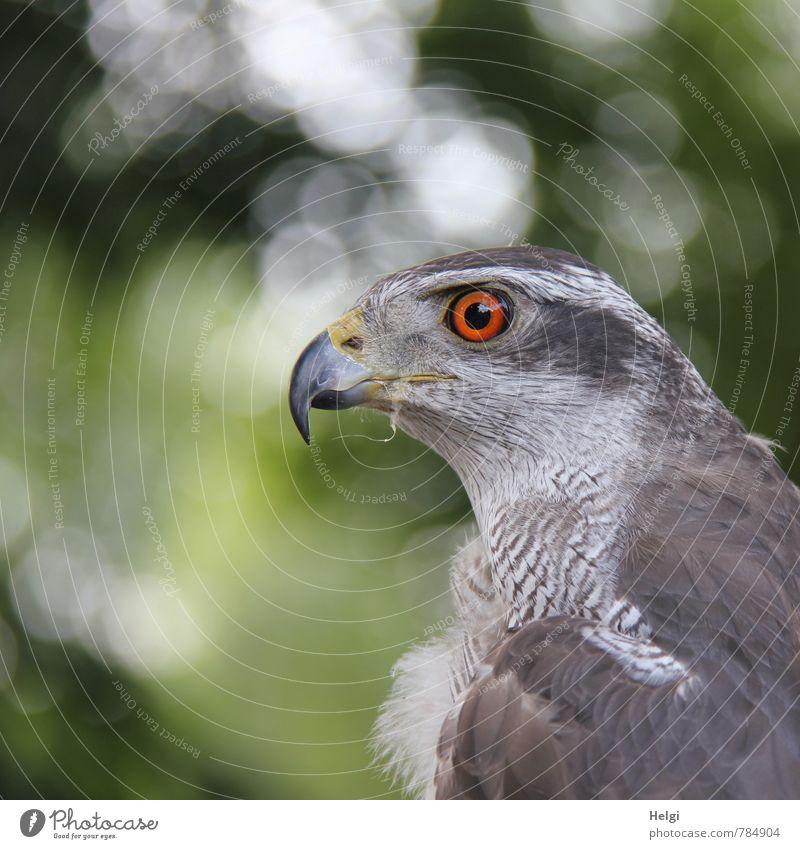 Nature Beautiful Green White Calm Animal Life Eyes Natural Gray Bird Orange Wild animal Esthetic Observe Feather
