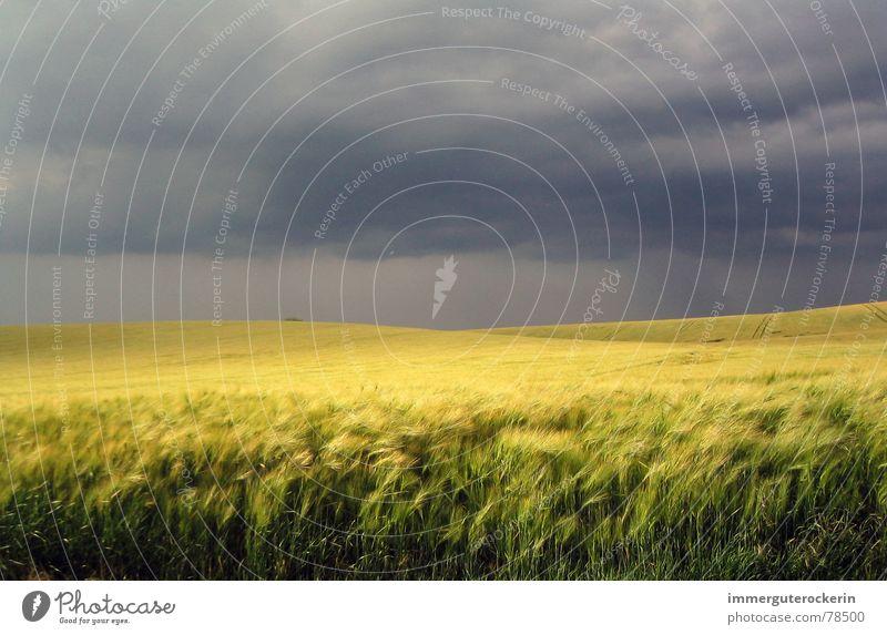 Sky Yellow Dark Sadness Field Threat Grain Wheat