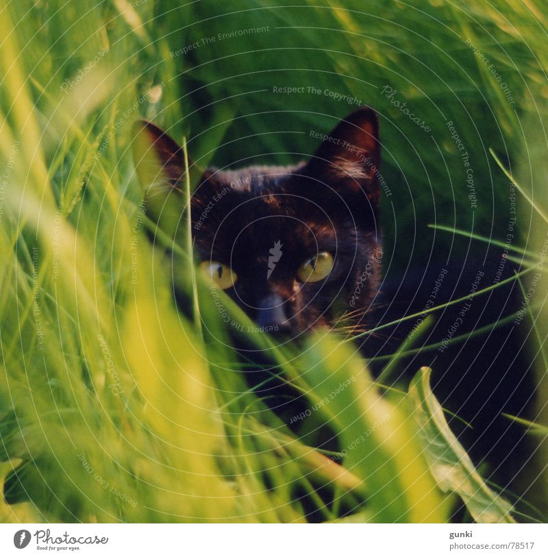 Green Summer Black Animal Dream Cat Fresh Pet