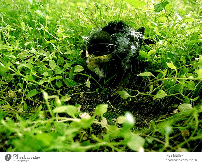 where's my nest? Nest Doomed Bird Animal Search Green Spring chicken Floor covering
