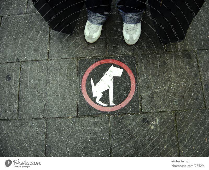 Poor dog! Sidewalk Bans Regulation Belgium Interesting Understanding Modern art Regular Signage Netherlands Dog Town In transit Middle Leisure and hobbies