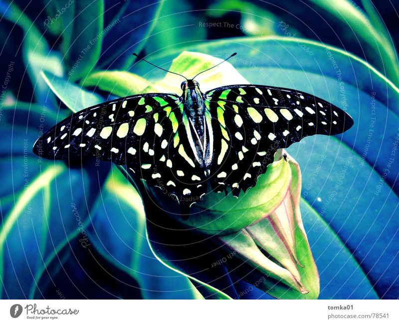 Nature Blue Green Beautiful Plant Summer Joy Leaf Calm Black Animal Colour Relaxation Yellow Freedom Grass