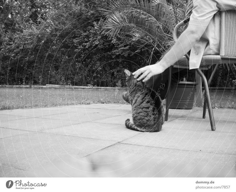 Human being Relaxation Garden Cat Caress