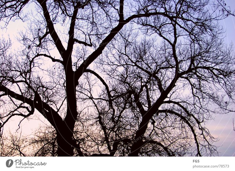 Symbol from past days Calm Nature Plant Sky Clouds Horizon Autumn Tree Old Esthetic Dark Timeless Treetop Branch Impressive Colour photo Multicoloured