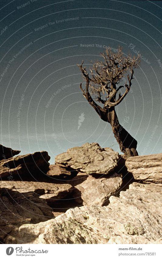 Sky Blue Stone USA Desert Derelict Americas Blue sky Drought Shriveled Badlands Dried Western Erosion Limp