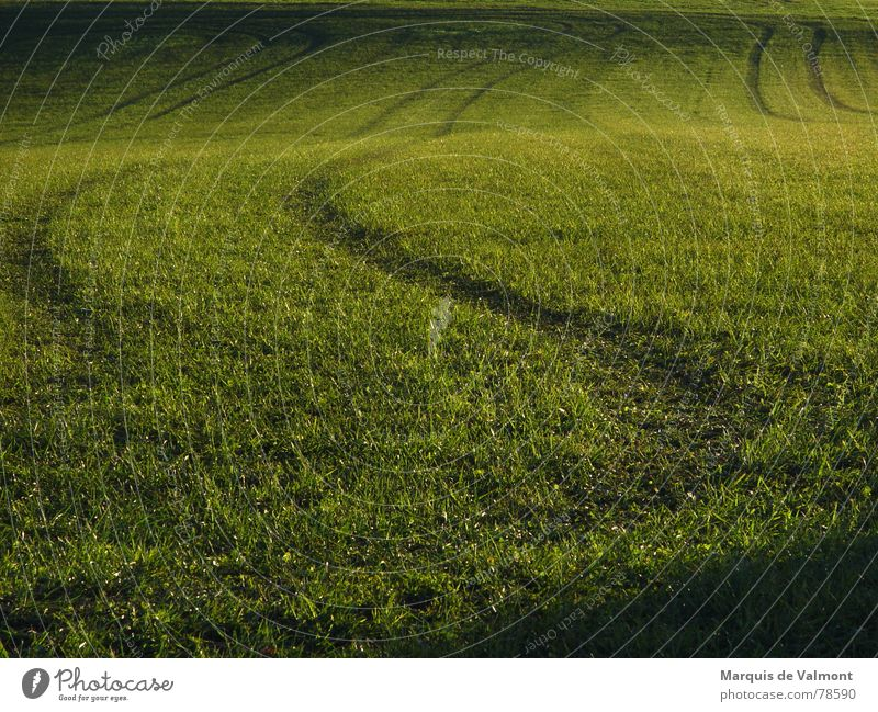 Green tracks in the grass Grass Meadow Field Waves Sunlight sun low When the farmer was drunk. Tracks Shadow