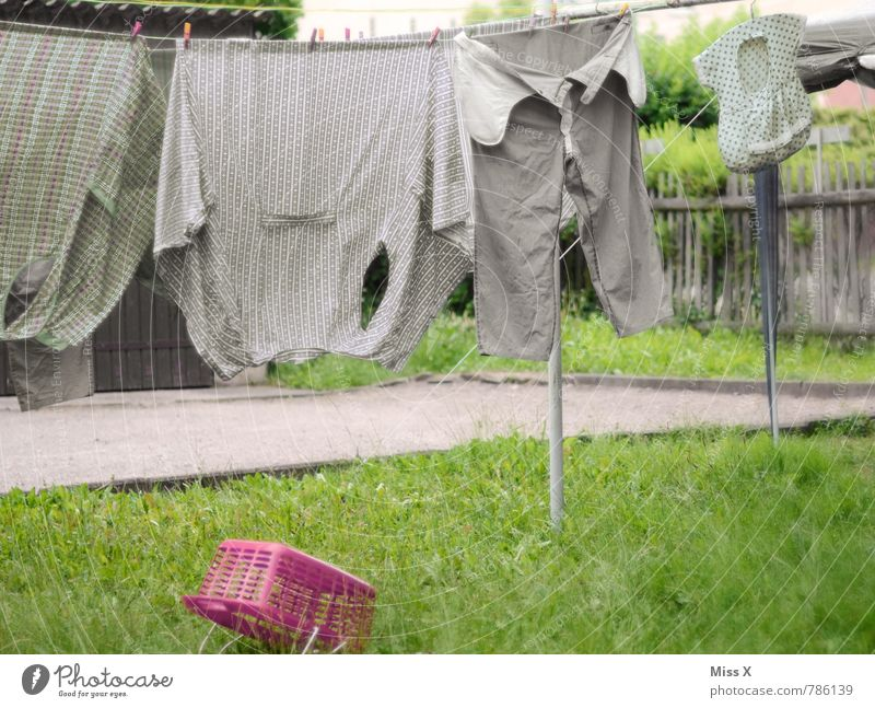 old laundry Living or residing Garden Clothing Workwear Shirt Pants Growth Old Dirty Wet Clean Dry Gray Cleanliness Thrifty Clothesline Laundry basket Washing