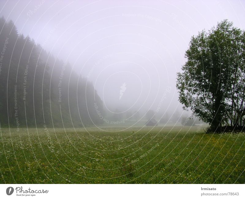 Nature Tree Summer Meadow Landscape Fog