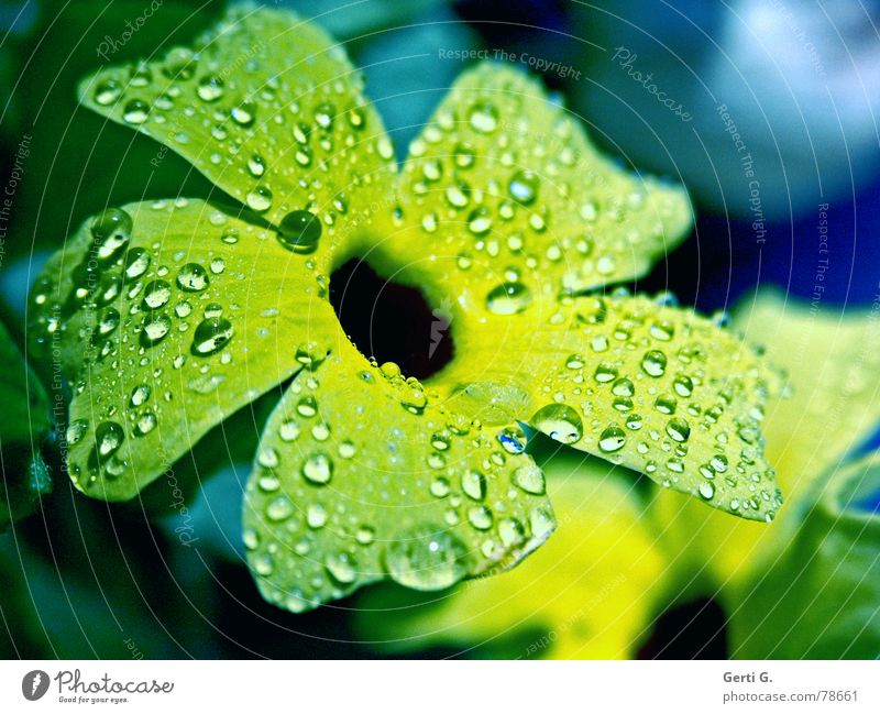 Nature Plant Blue Beautiful Green Summer Colour Water Flower Cold Yellow Blossom Autumn Spring Rain Ice