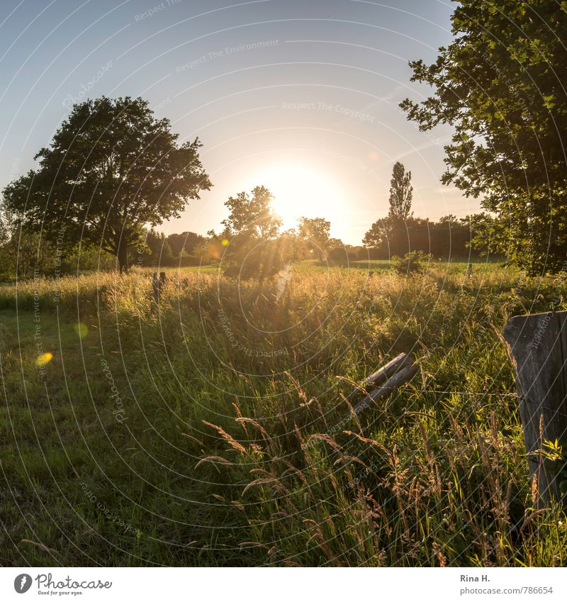Last rays of sun II Summer Nature Sky Cloudless sky Sunlight Beautiful weather Tree Grass Bushes Meadow Field Illuminate Natural Contentment Calm Fence Pole