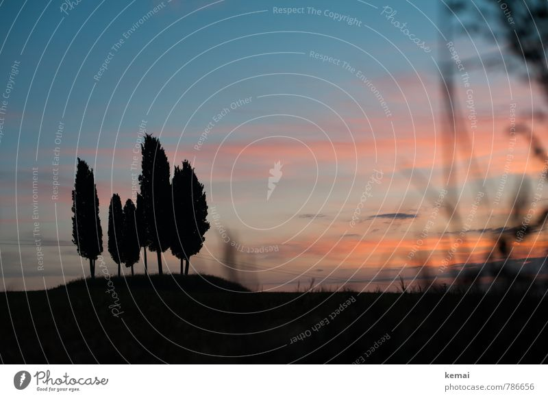 classic Environment Nature Landscape Plant Sky Clouds Sunrise Sunset Sunlight Summer Beautiful weather Tree Cypress Meadow Hill Tuscany Italy Blue Red Black