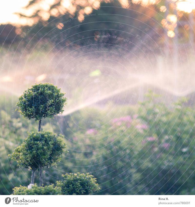 Nature Green Plant Summer Warmth Garden Bushes Climate Beautiful weather Gardening Drought Cast Spray Market garden Irrigation Box tree