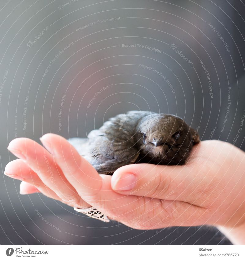 Saved Animal Wild animal Bird Animal face swifts 1 Touch Crouch Lie Looking Sit Sadness Cuddly Soft Trust Safety Protection Safety (feeling of) Warm-heartedness