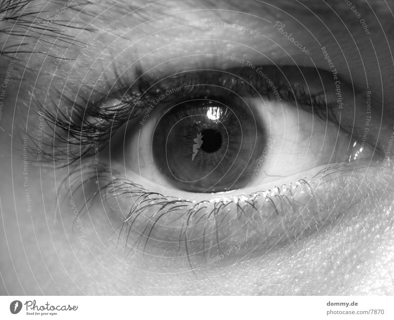 Eye (part 1024) Eyelash Brown Human being Eyes eye Black & white photo Iris kaz