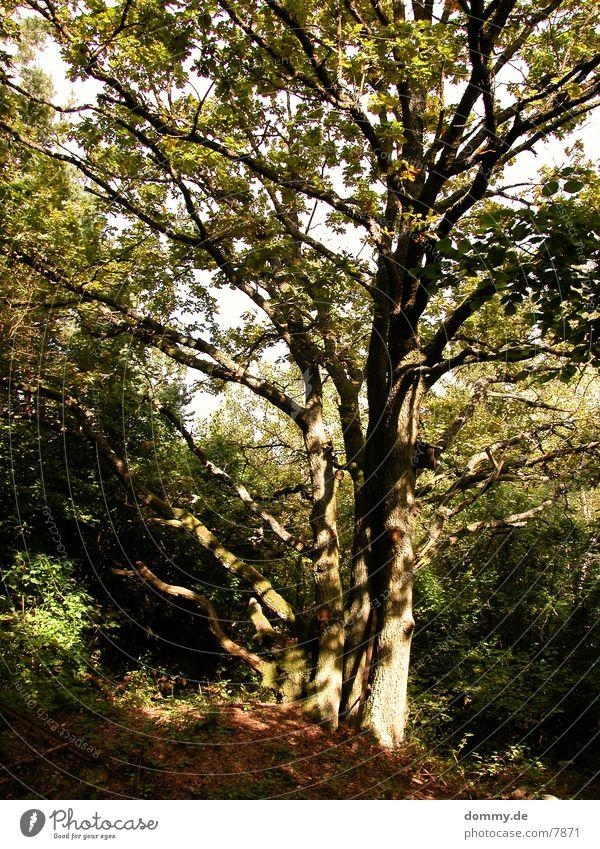 Nature Tree Sun