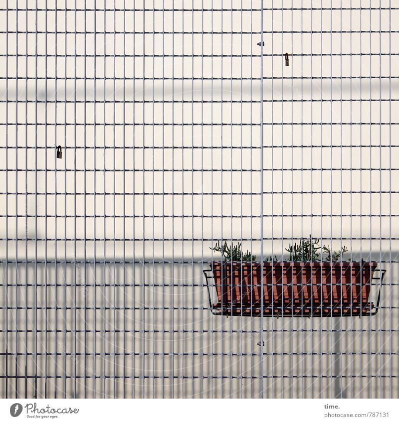 betrayed & sold Plant Window box Wall (barrier) Wall (building) Facade Grating Metal grid Mesh grid Pain Disappointment Loneliness Bizarre Design