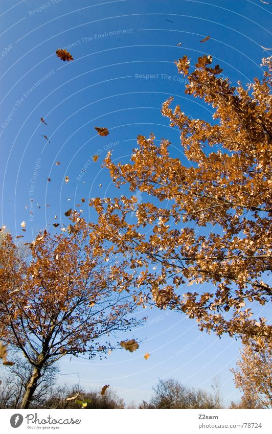autumn dream Seasons Dream Autumn Leaf Tree Sky Nature Flying Landscape Blue