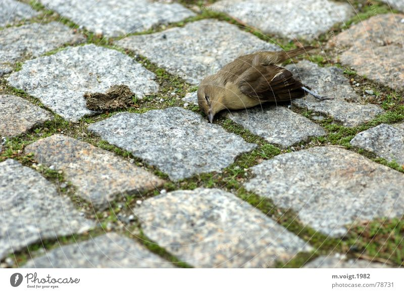 Animal Street Life Death Stone Sadness Bird Grief Gloomy End Lie Transience Cobblestones Sparrow Passerine bird