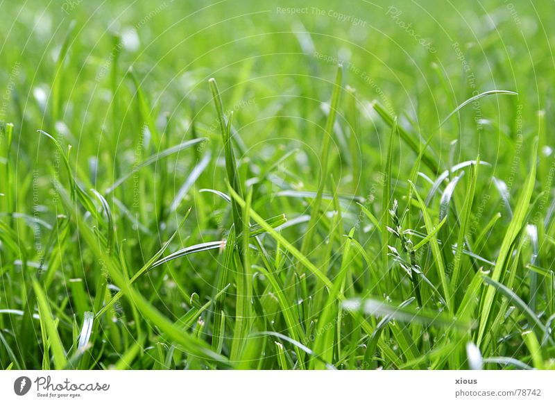unmown Depth of field Grass Meadow Green Worm's-eye view Summer Calm Fresh Green space Macro (Extreme close-up) Grass surface Serene Relaxation floor height