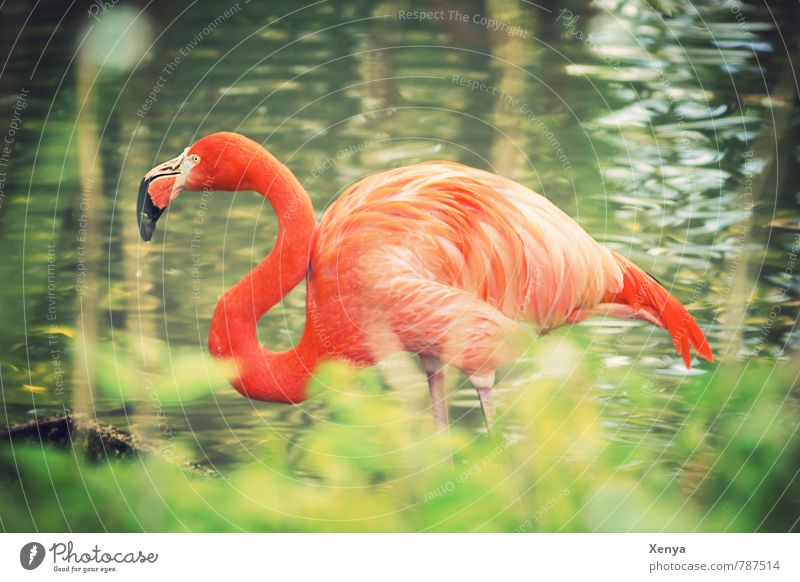 In the high grass Animal Flamingo Zoo 1 Exotic Green Orange Contrast Curved Neck Colour photo Exterior shot Day