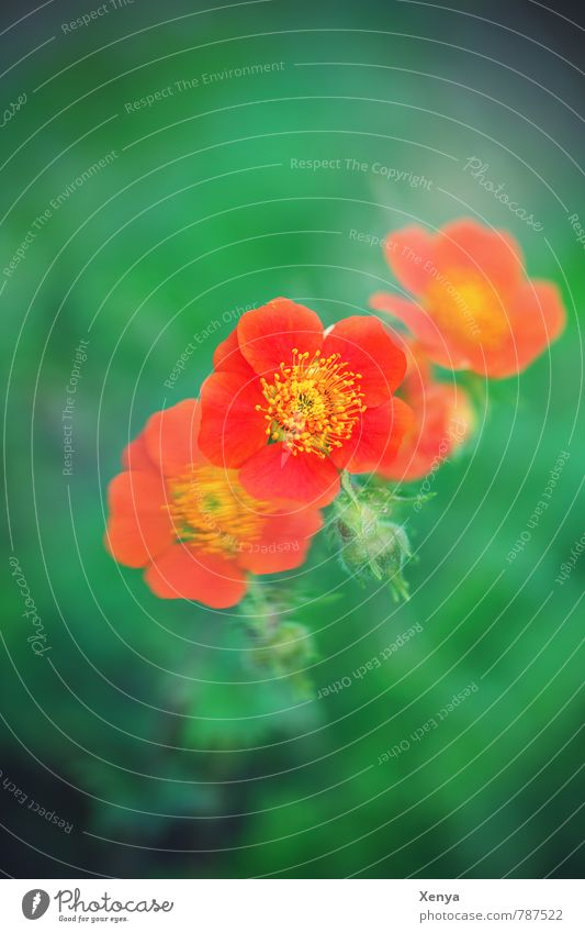 Nature Plant Green Flower Environment Yellow Movement Blossom Spring Garden Orange Happiness Blossoming Double exposure Anticipation Spring fever