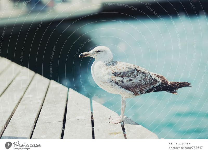 seagull Lifestyle Leisure and hobbies Vacation & Travel Tourism Trip Adventure Far-off places Freedom City trip Cruise Summer Summer vacation Sun Sunbathing