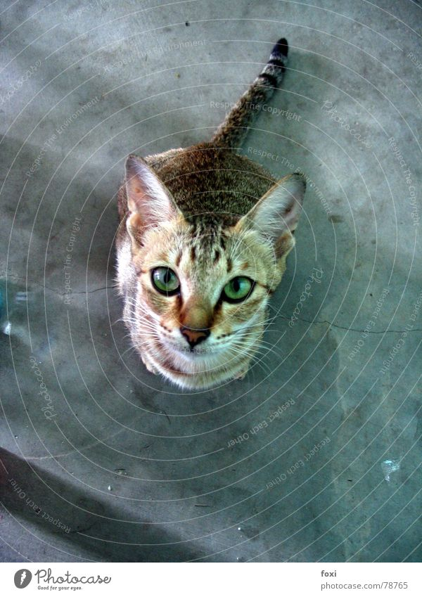 Give me the food, can opener! Beg Bird's-eye view Cat Longing Motionless Green Mammal Looking Eyes