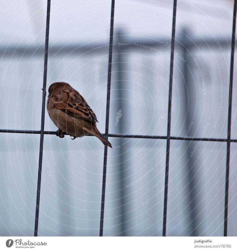Calm Animal Sadness Brown Bird Small Sit Grief Feather Dresden Living thing Traffic infrastructure Fence Sparrow Ornithology Hoarding
