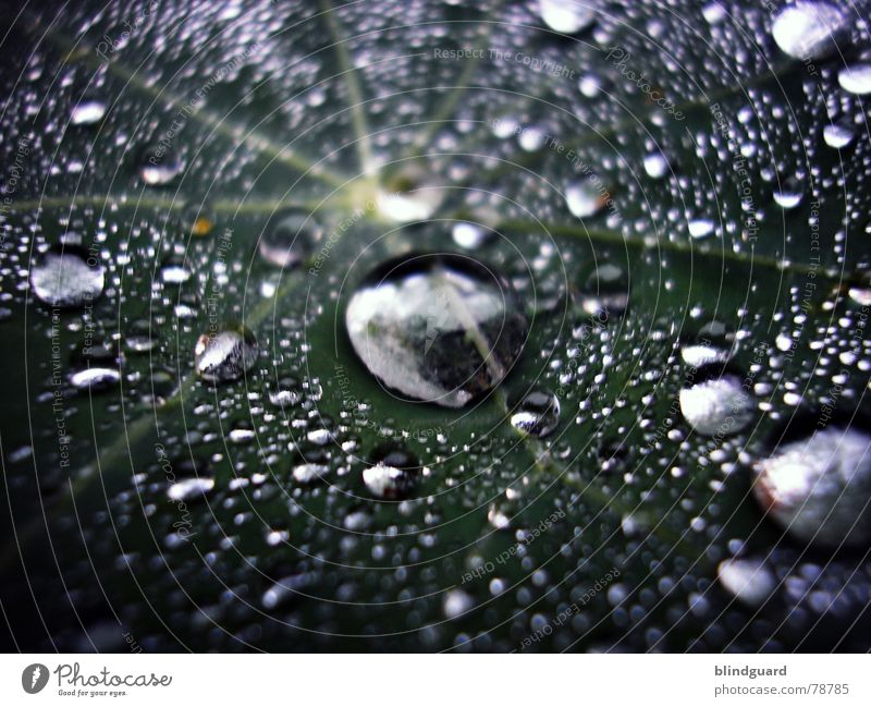 Green Water Leaf Life Small Garden Line Rain Glittering Fresh Drops of water Large Wet Star (Symbol) Near Division