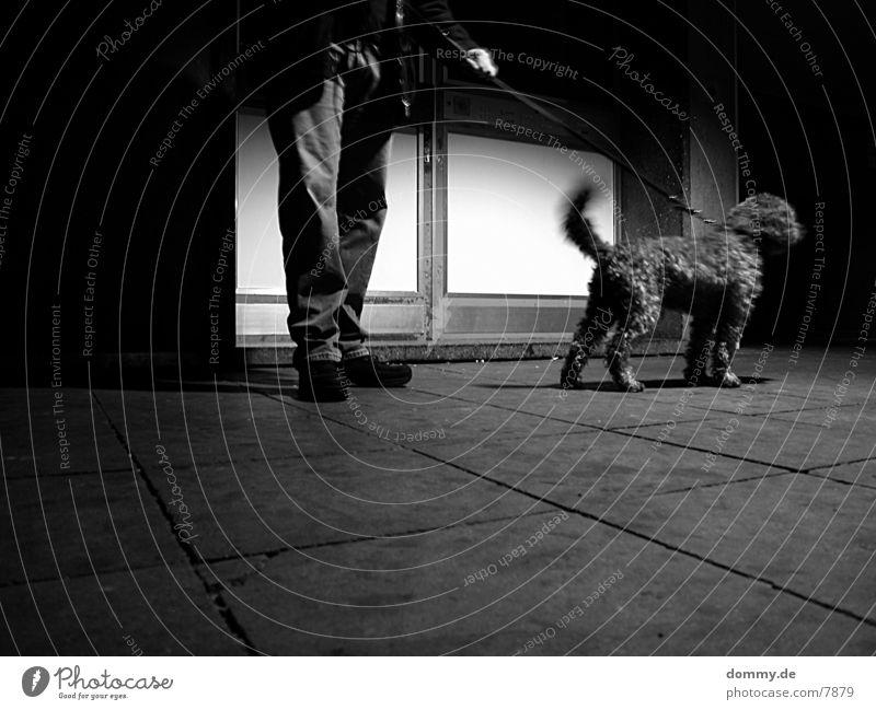 *Hunting dog* Dog Long exposure Transport Black & white photo Curl Calm kaz