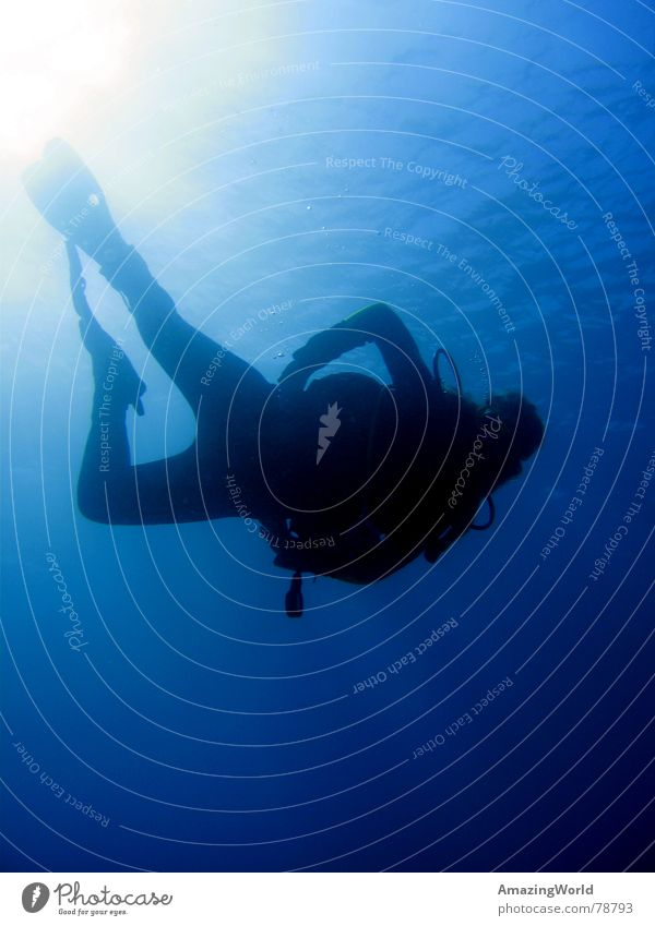 Water Ocean Blue Freedom Dive Infinity Deep Aquatics Diver Egypt Underwater photo