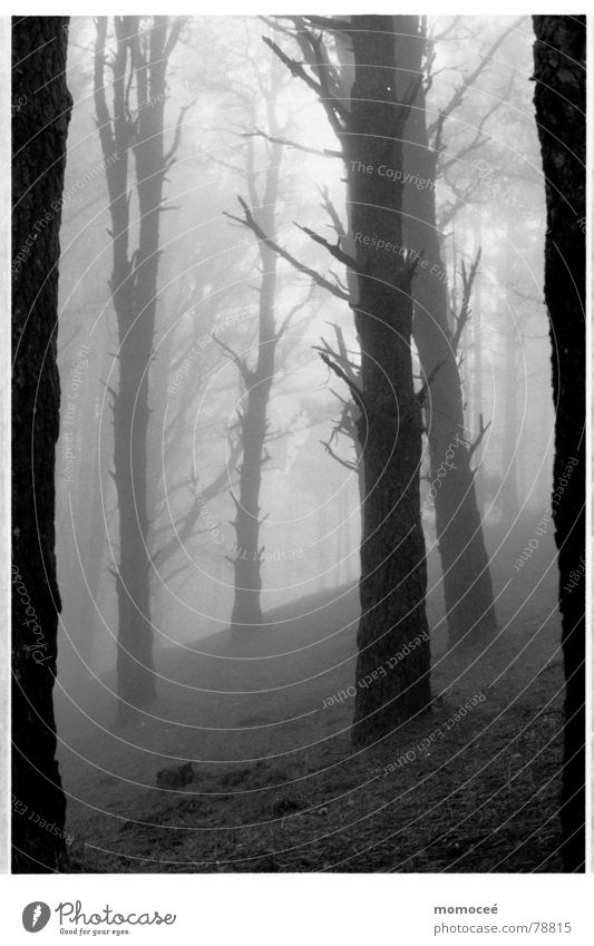 the first Forest Fog Clouds Tree Grief Calm Beautiful Loneliness Search Longing Empty Sadness Far-off places