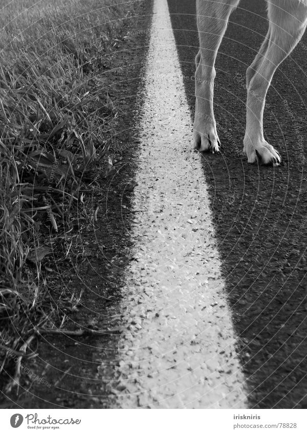 Blonde Beauty Go off Grass Roadside Line Dog Paw Mammal on the socks Legs Lanes & trails Nature Street Detail Parts of body Black & white photo Feet